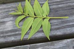 Zamknięty widok liść zakłada na stole Zdjęcia Royalty Free
