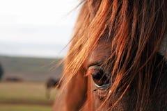 ZAMKNIĘTY widok oko koń zdjęcia royalty free