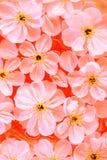 zamknięty zamknięci wiśnia kwiaty obrazy royalty free