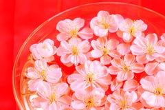 zamknięty zamknięci wiśnia kwiaty zdjęcia stock