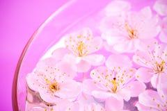zamknięty zamknięci wiśnia kwiaty fotografia royalty free