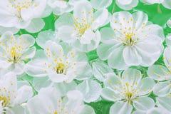 zamknięty zamknięci wiśnia kwiaty fotografia stock
