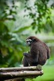 zamknięty zamknięta małpa Zdjęcia Royalty Free