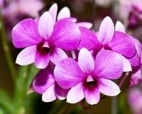 zamknięty zamknięta orchidea Zdjęcia Royalty Free