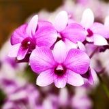zamknięty zamknięta orchidea Obrazy Royalty Free
