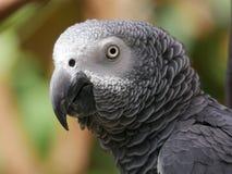 zamknięty zamknięta papuga Obraz Royalty Free