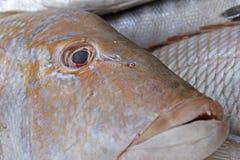 zamknięty zamknięta ryba Zdjęcie Royalty Free