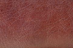 zamknięty zamknięta tło skóra Fotografia Stock