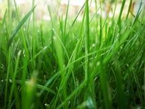 zamknięty zamknięta trawa Obraz Royalty Free