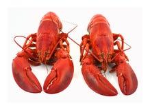 zamkniętych homarów ładny widok Obrazy Stock