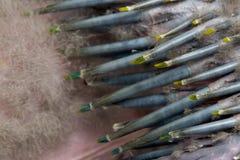 zamknięta wielka zielona ara s zielony uskrzydla Fotografia Royalty Free