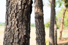 zamknięty drzewo Zdjęcie Royalty Free