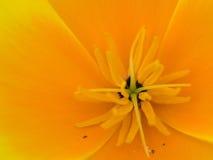 zamknięty kwiat Obrazy Stock