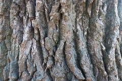 Zamknięty widok barkentyna czarna topola Fotografia Stock