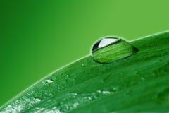 zamknij kropli wody podnosi roślinnych Obrazy Royalty Free