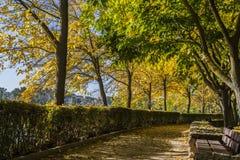 Zamora, park Royalty Free Stock Image