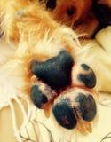 Zampa alti cinque del cane Fotografie Stock Libere da Diritti