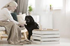 Zampa dante di aiuto del cane fotografia stock libera da diritti