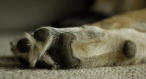 Zampa del cane fotografie stock libere da diritti