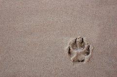 Zampa del cane Fotografie Stock