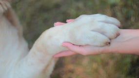 Zampa del cane sulla palma umana Immagini Stock Libere da Diritti