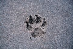 Zampa del cane sulla spiaggia Immagini Stock Libere da Diritti