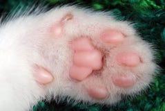 Zampa del gattino Immagini Stock