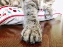 Zampa del primo piano di un gatto grigio Fotografie Stock Libere da Diritti