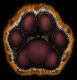 Zampa della tigre su priorità bassa nera Immagine Stock