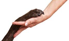 Zampa e mano del cane che fanno stretta di mano Fotografie Stock Libere da Diritti