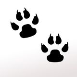 Zampe animali Immagini Stock Libere da Diritti
