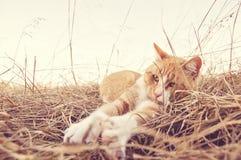 Zampe coccole del gatto stese Immagine Stock Libera da Diritti