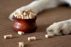 Zampe del cane accanto ad una ciotola di biscotti per cani Immagine Stock Libera da Diritti