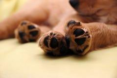 Zampe del cucciolo di sonno Immagini Stock Libere da Diritti