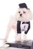 Zampe del cucciolo sul calcolatore immagine stock libera da diritti