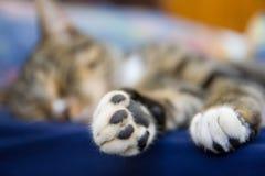 Zampe del gattino Fotografie Stock
