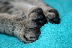 Zampe del gatto Immagine Stock