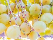 Zamyka do świeżego i owocnego gwiazdowy agrest Fotografia Royalty Free
