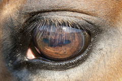 Zamyka oko koński oko Fotografia Royalty Free