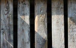 Zamyka panel szarzy drewniani płotowi panel Fotografia Stock