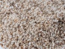 Zamyka strzał grupa sezamowi ziarna & x28; Sesamum indicum& x29; zdjęcia stock