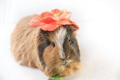 Zamyka up śliczny królik doświadczalny Obrazy Royalty Free