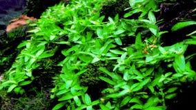 Zamyka up świeża zielona roślina wodna zbiory wideo