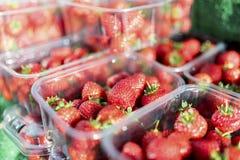 Zamyka up świeże i dojrzałe Angielskie lato truskawki w punnet Obraz Stock