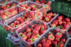 Zamyka up świeże i dojrzałe Angielskie lato truskawki w punnet Zdjęcia Royalty Free