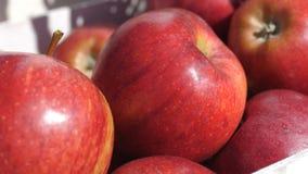 Zamyka up świeżo ukradzeni czerwoni Fiji jabłka, oceniać i pakujący zbiory