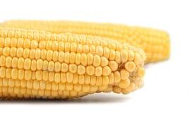 Zamyka up świeży kukurydzany ucho. Obrazy Royalty Free