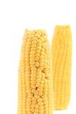 Zamyka up świeży kukurydzany ucho. Zdjęcia Royalty Free