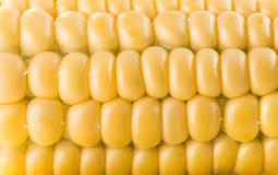 Zamyka up świeży kukurydzany ucho Obrazy Royalty Free