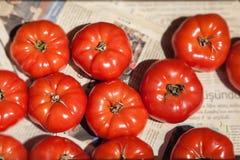 Zamyka up świezi pomidory dla sprzedaży z gazetowym tłem Obrazy Royalty Free
